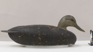 "Fig. 13. Black duck decoy after treatment on new mount.  Charles ""Shang"" Wheeler, Black Duck Decoy, unknown date. Cork, wood, paint, glass, metal and leather, 16.19 X 18.73 X 45.09 cm (overall). Collection of Shelburne Museum, gift of Mrs. Howard Newton. 1969-77"