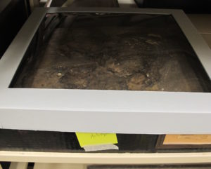 Figure 3. A new box lid with a polyester window cut into it.  Note that the frame sits above the fossil, over the outside of the wooden tray. Lift by the edges to remove the lid.